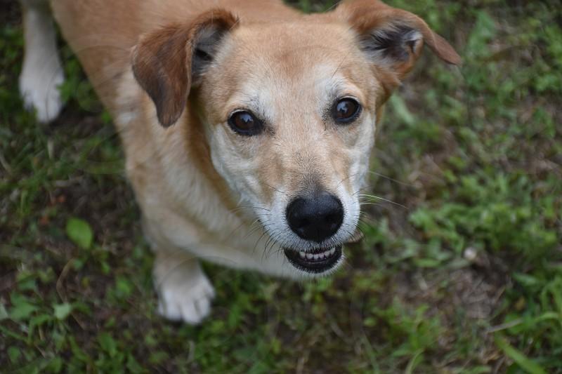 Portrait of the dog photo