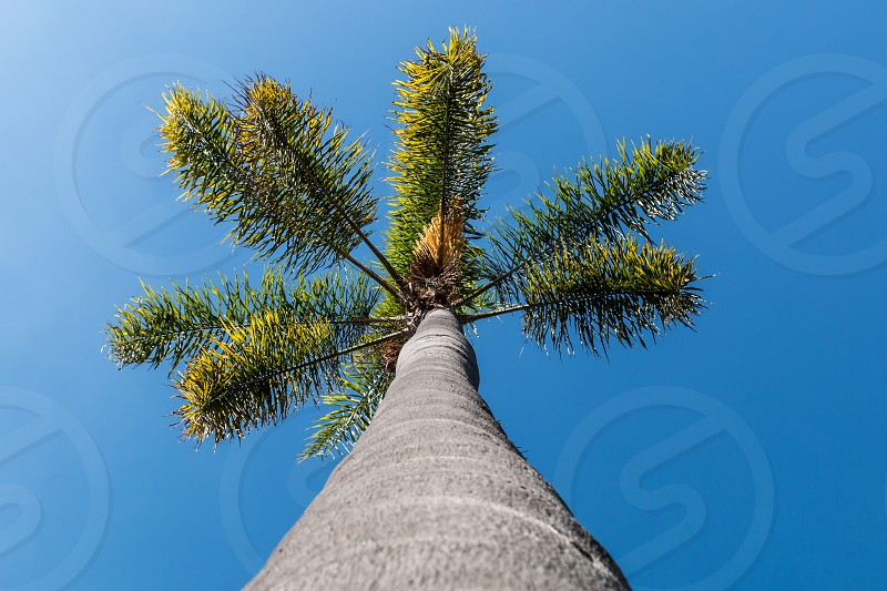 low angle photography of grey trunk of palm tree under blue sky during daytime photo