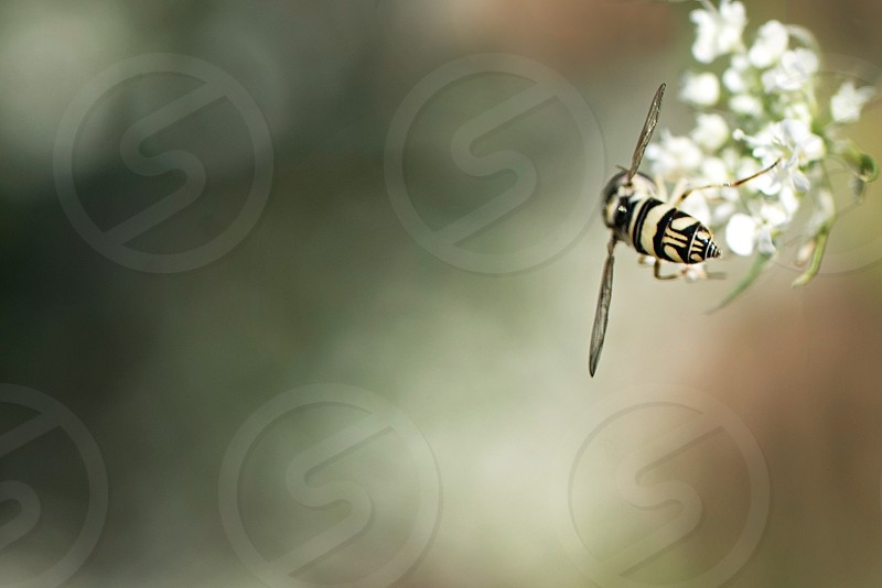 Fly sitting on a flower photo