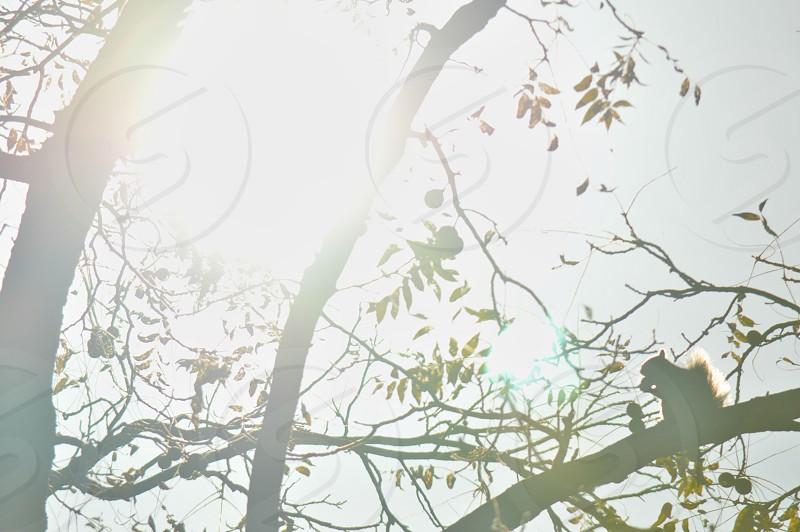 sunlight on tree branch photo
