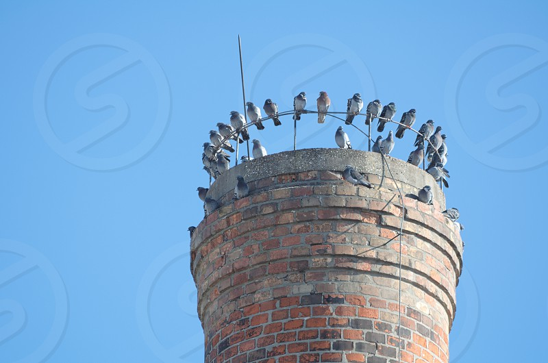 Grey Pigeons Sitting on Industrial Chimney Top on a Sunny Day photo