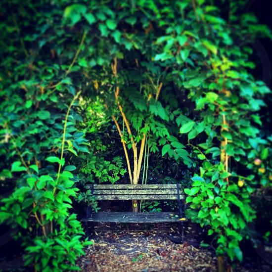 Green leaf arch way park bench photo