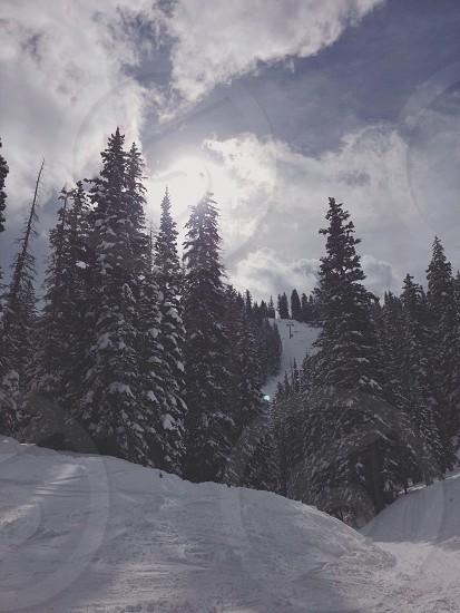 Snowbird Mountains Utah photo