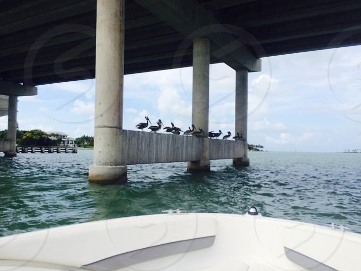 brown birds standing on pillar of bridge in body of water photo