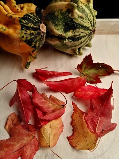 fall autumn background studio shot photo
