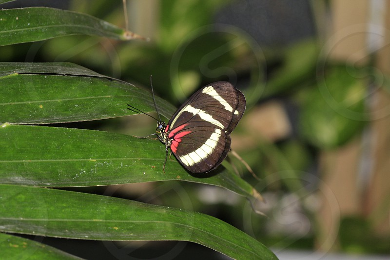 Detroit Zoo Butterfly 3 photo