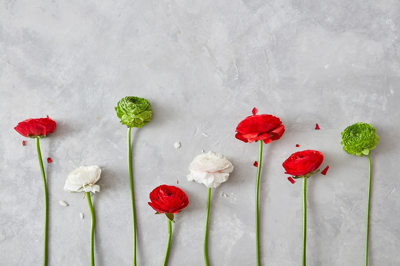 a composition from flowers of white red green flowers and petals on a gray concrete background. A greeting card a valentine's day photo