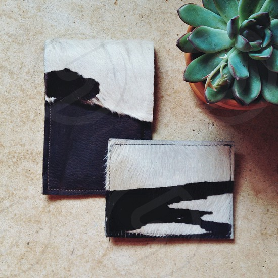 cow print fur wallets and succulent plant photo