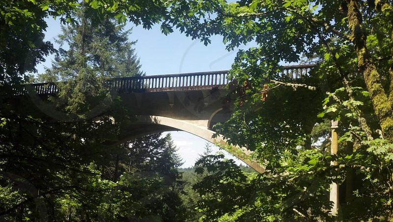 Bridge & Nature photo