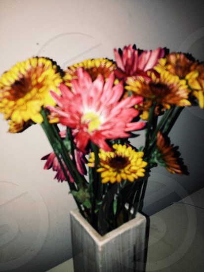 yellow and pink daisies on the vase photo