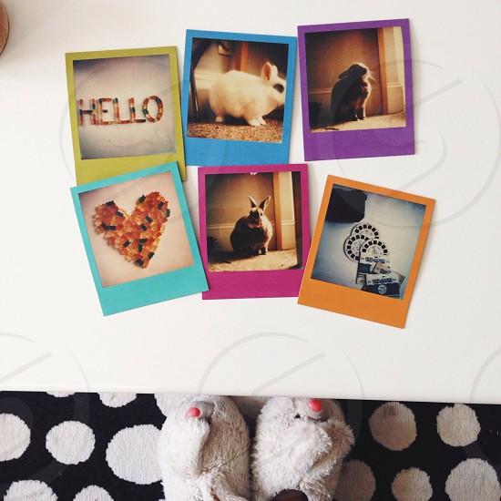 bunny polaroids photo