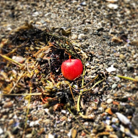 Red Apple on the ground.  photo