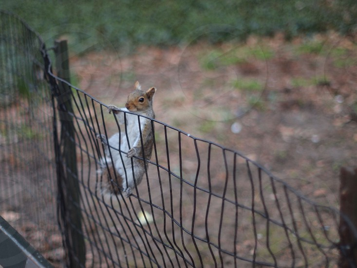 Hang on squirrel! photo