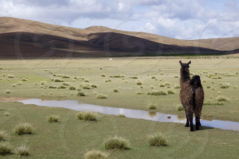 Bolivia. photo