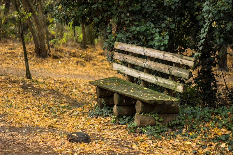 Bench surrounded by leaves. photo
