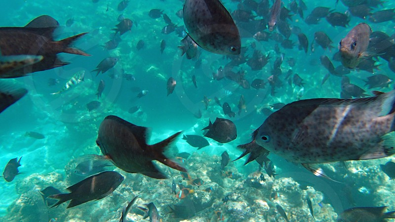 A school of fish swimming in the sea photo