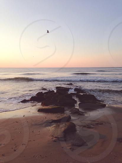 bird flying over rocky beach at sunrise photo