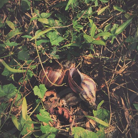Snail. Garden.  photo