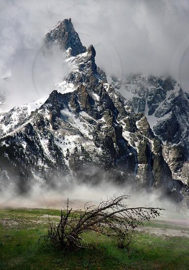 Teton mountain with withered tree. photo