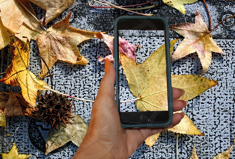 Aerial view of a hand photographing leaves on the ground with a cellphone camera. photo