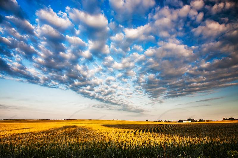 Summer Morning in Iowa photo