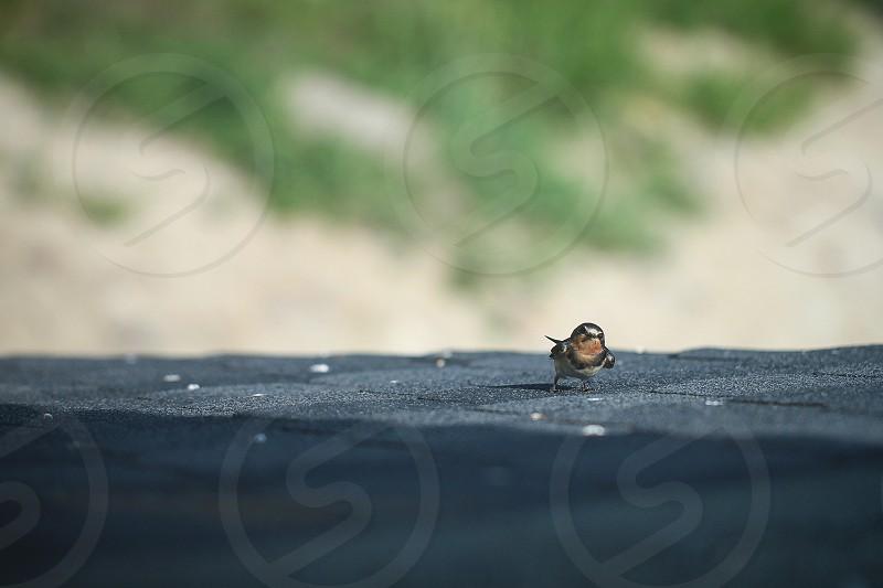 summer bird nature morning sparrow sight photo