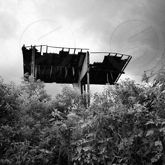 black and white portrait photo