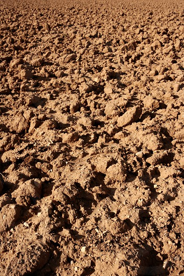 Clay red agriculture textured soil of farmanland photo