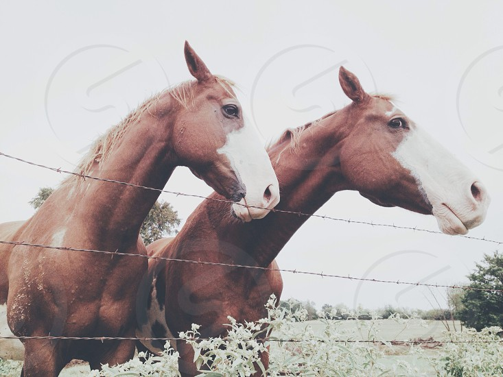 brown horse and barbed wire fence photo