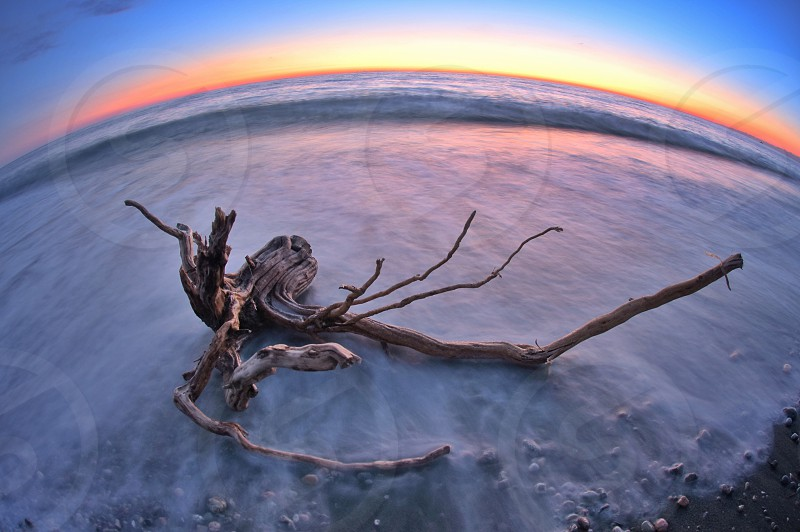 fish eye photo of driftwood near on body of water during golden hour photo