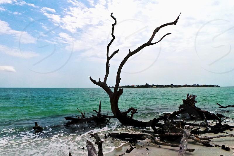An island near Captiva  photo