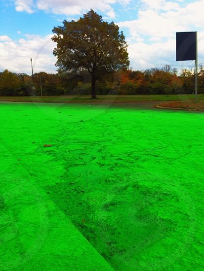 green tree along road photo