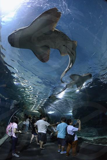 Das Siam Ocean World Aquarium in der Hauptstadt Bangkok von Thailand in Suedostasien. photo