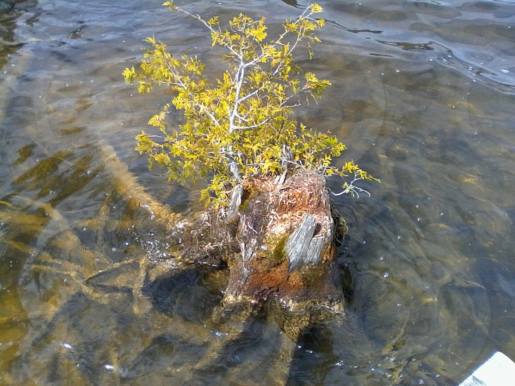 Stumped? Hertz will help breathe new life into the needed peace on the AuSable River.  Visit the Lumberman's Monument today! photo