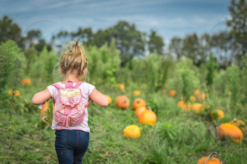 Little girl with a backpack walking in a pumpkin patch away from the camera. Little girl aged 3 dressed in pink. Dramatic blue sky and green pumpkin field. photo