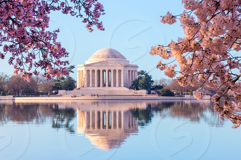 Sun rising illuminates the Jefferson Memorial and Tidal Basin with bright pink cherry blossoms framing the monument photo