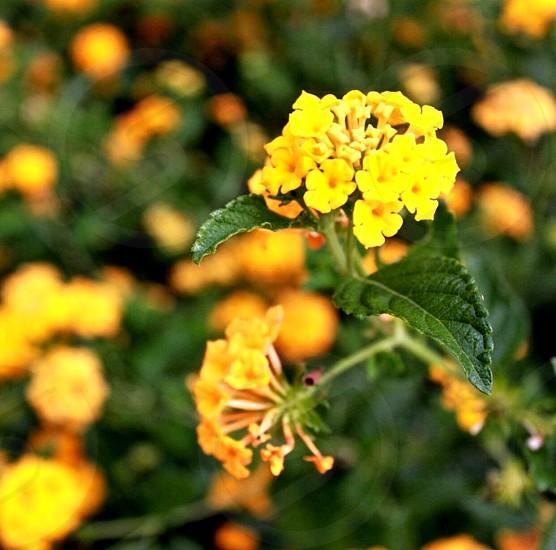 Yellow nature photography plant highangleshot photo