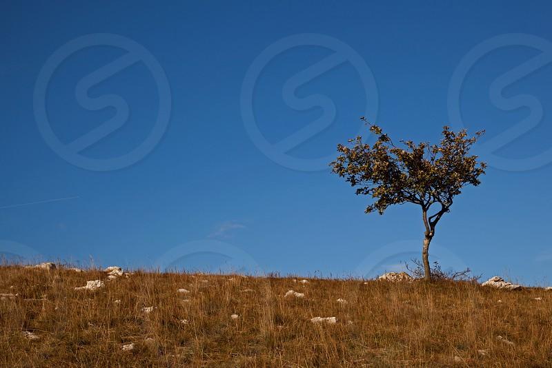 green tree on mountain photo