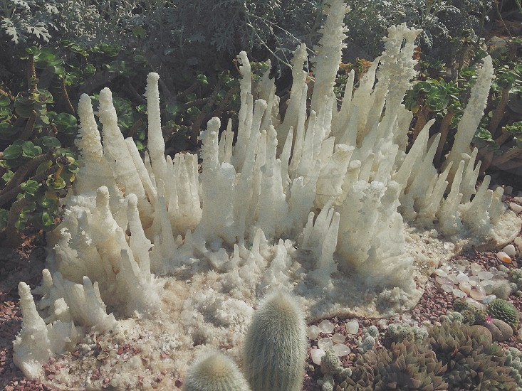 white cactus beside plants photo