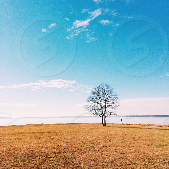 brown bare tree on grass field under green sky photo