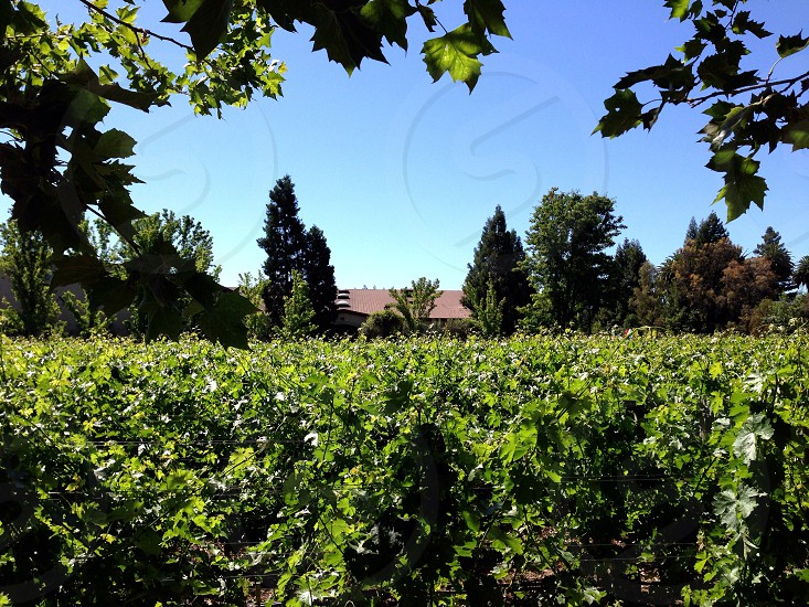 St Helena California  photo