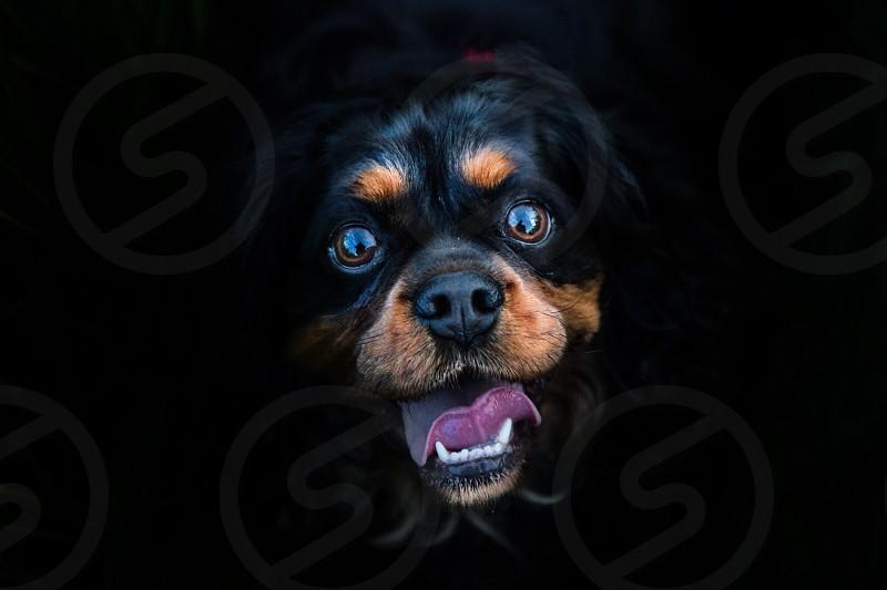 Oscar doggie portrait!  photo