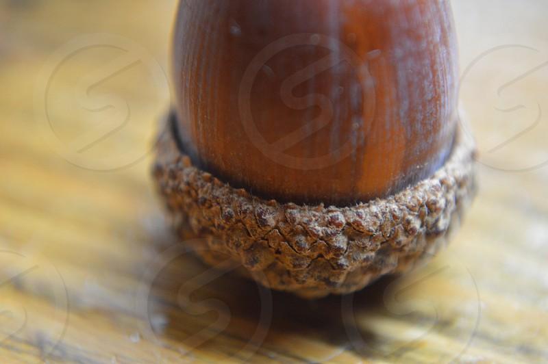 acorn on wood table photo