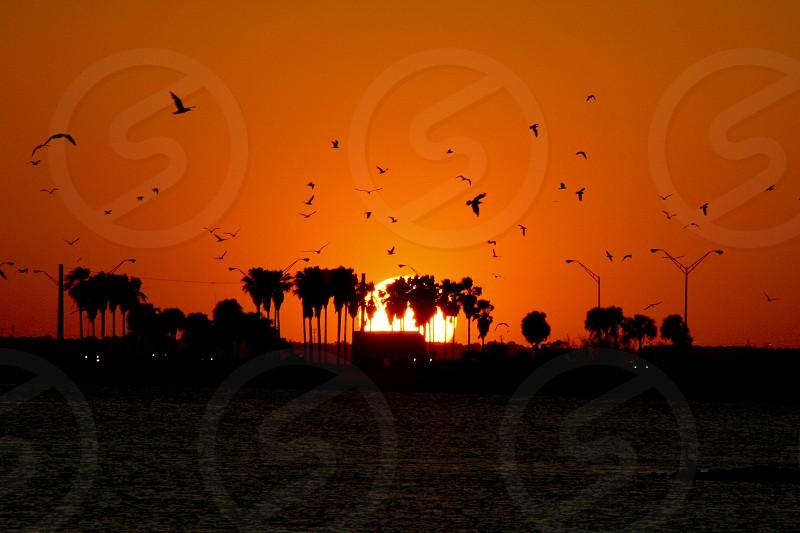Sunset Tampa Florida photo