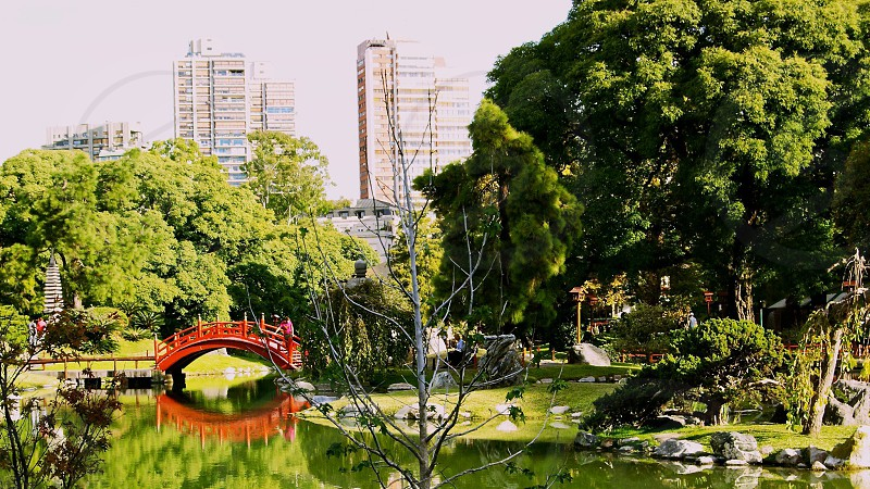 view of green trees and red bridge connecting on a pond photo