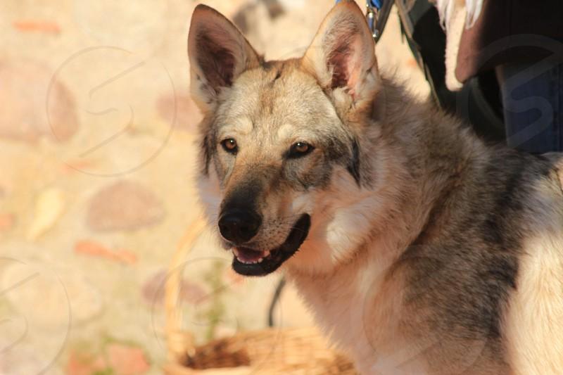 BEATIFUL DOG photo
