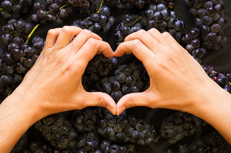 isabellagrape hand heart shape purple fruitautumn harvestwith love I love photo