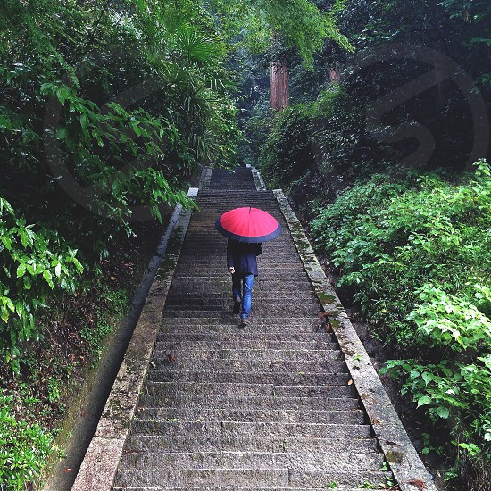 person holding red and  black umbrella and climbing up to gray concrete staircase photo