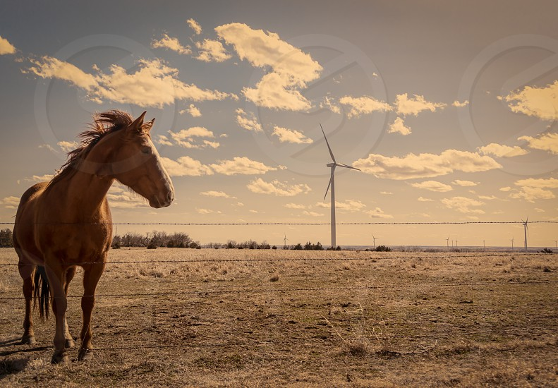 brown horse standing photo