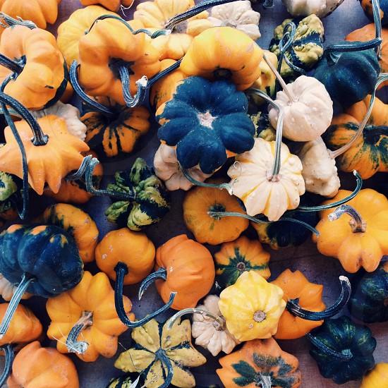 decorative squash gourds photo